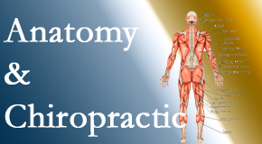 Amelia Chiropractic Clinic proudly delivers chiropractic care based on knowledge of anatomy to diagnose and treat spine related pain.