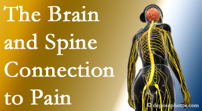 Amelia Chiropractic Clinic shares at the connection between the brain and spine in back pain patients to better help them find pain relief.