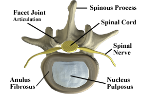 Axial View of Spine - Labeled
